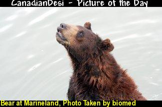 Bear at Marineland, Photo Taken
