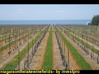 niagaraonthelakewinefields--