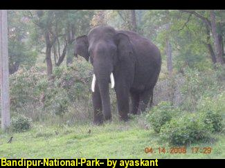 Bandipur-National-Park--